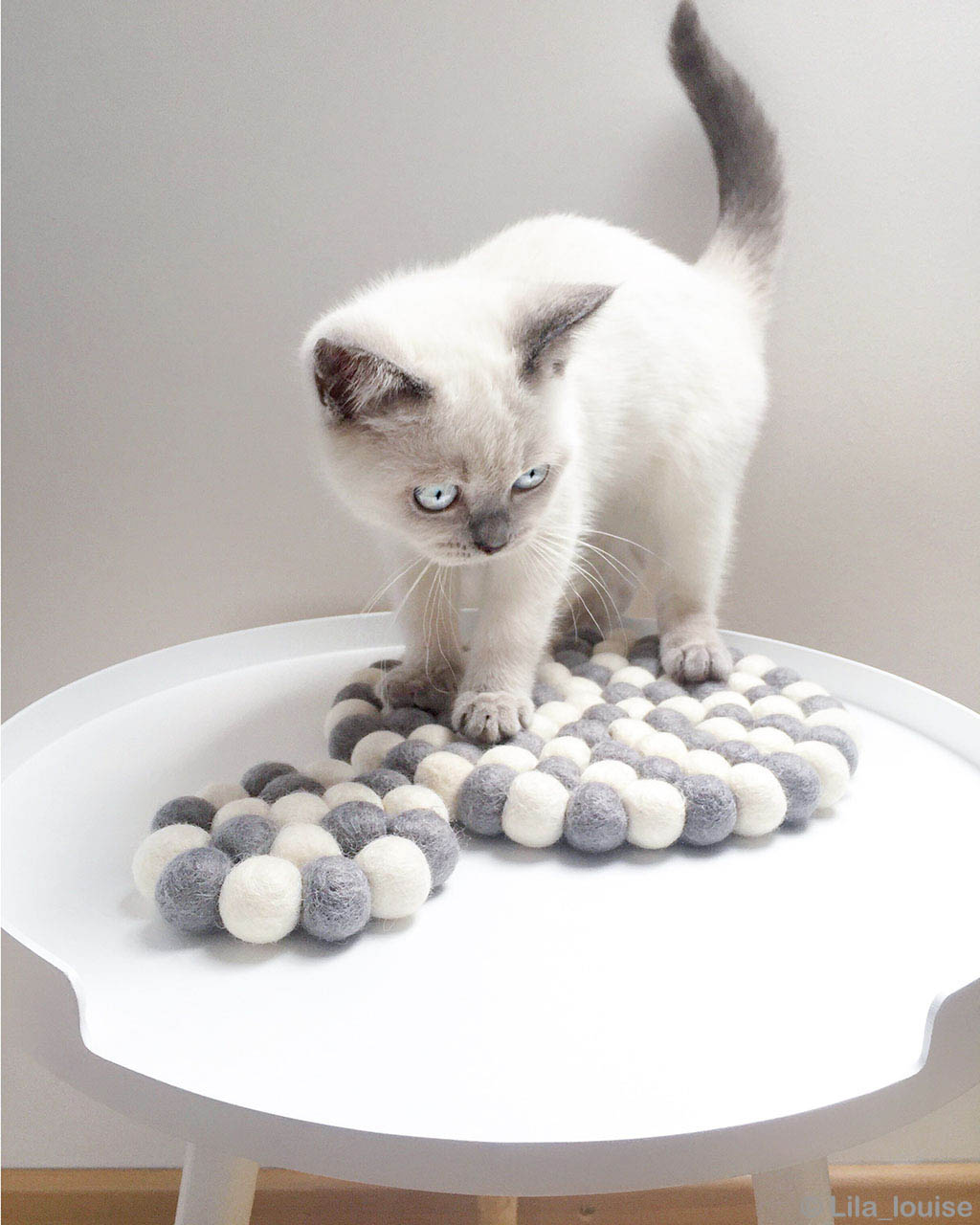 cute cat with cyan eyes contemporary rugs usa