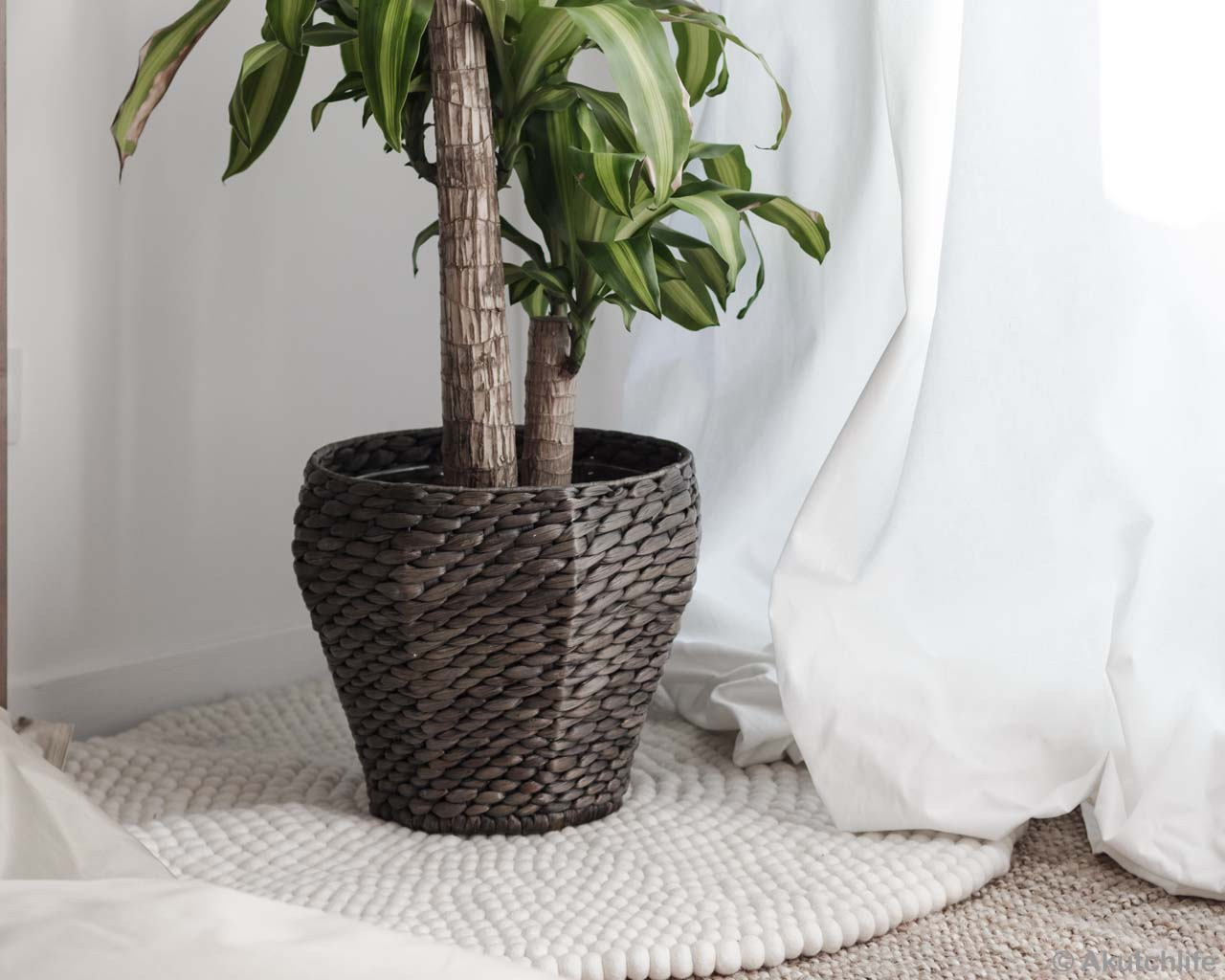 green plant with pot made by nepalian modern accent rug